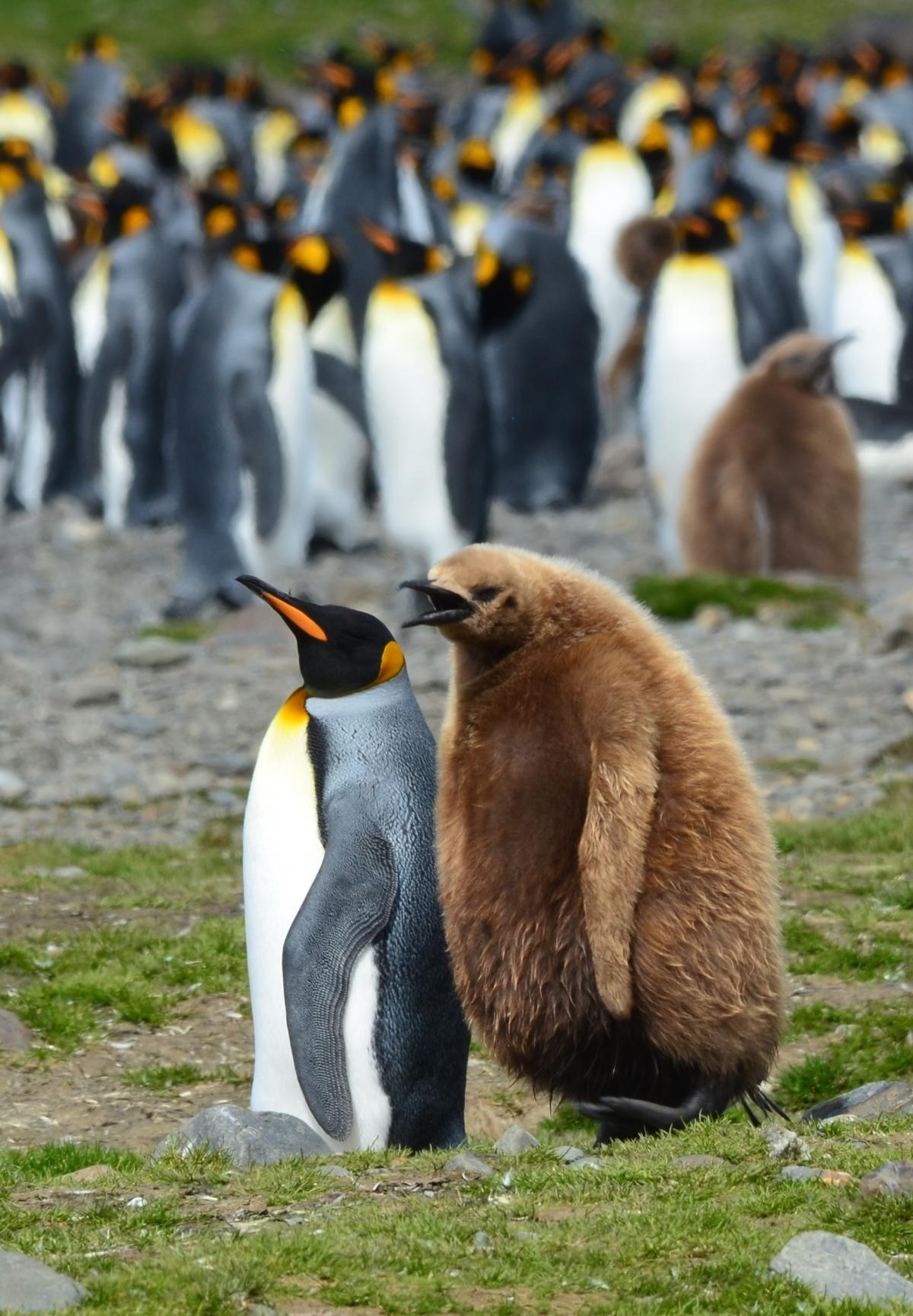 penguin hindu dating site Hindu antediluvian history by elijah hindu religion teaches that this current world was created from manu  dating their mutations remains a  penguin books .