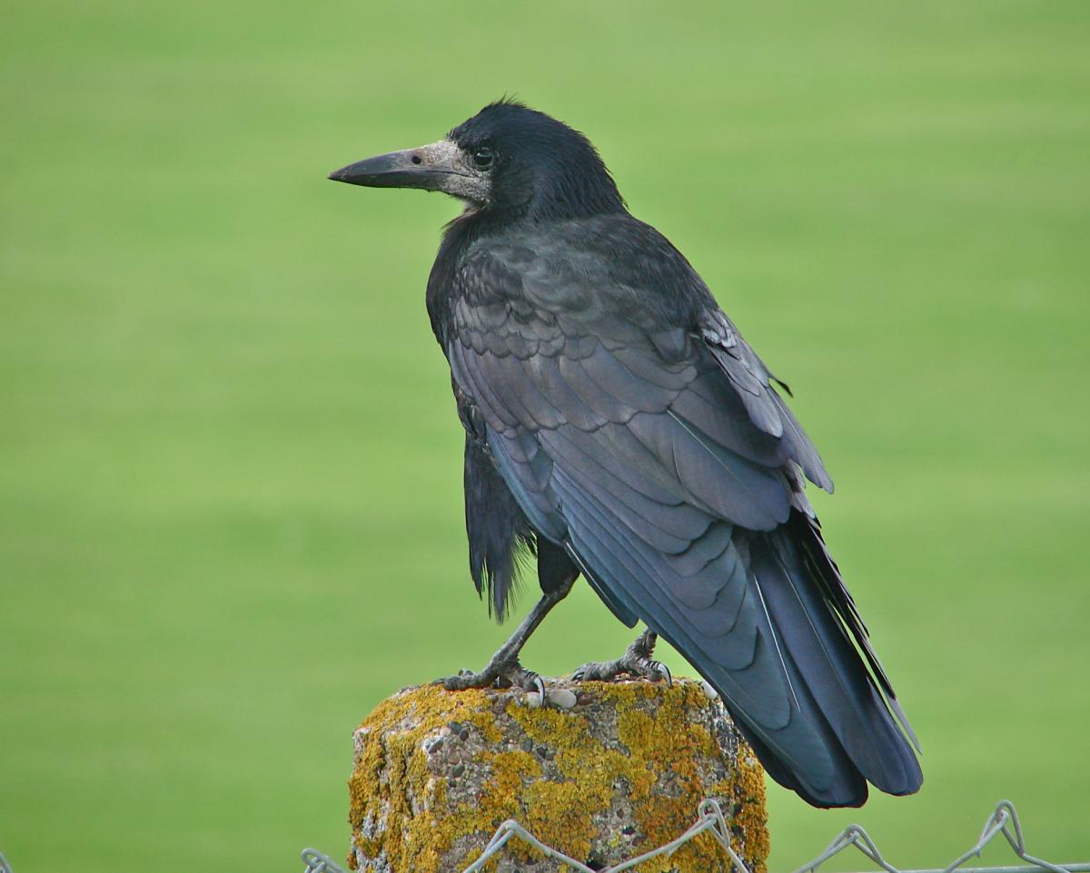 birdsonline