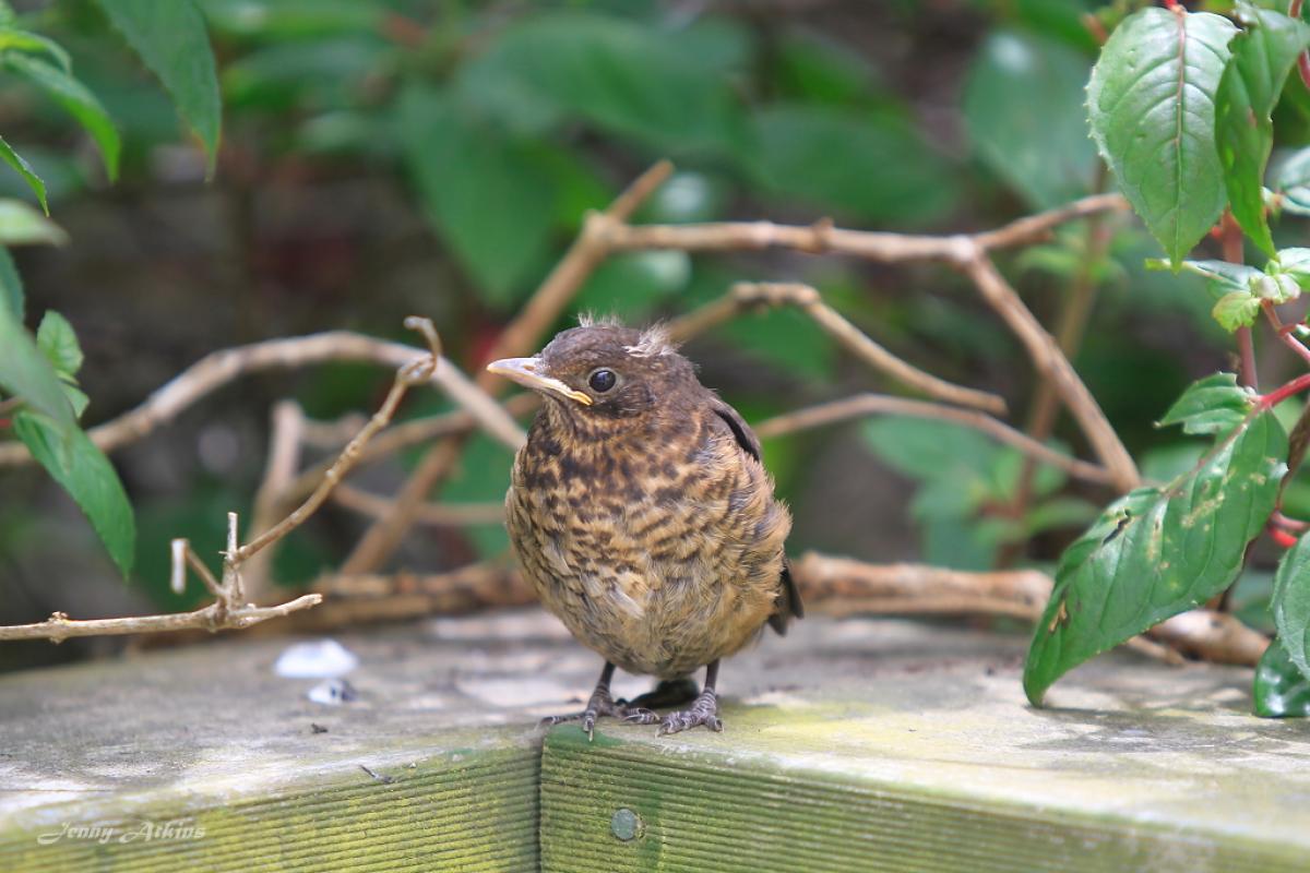 The Sparrows - Rattle Creak And Murmur