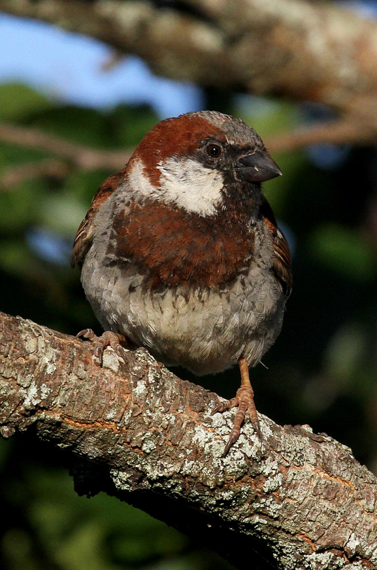 http://nzbirdsonline.org.nz/sites/all/files/1200599IMG_4201.JPG