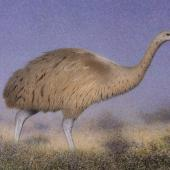 South Island giant moa. Adult in scrubland (710 x 494 mm watercolour and watercolour pencil on paper). South Island. Image © Paul Martinson by Paul Martinson