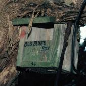 Black robin. 'Old Blue's' nest box. Mangere Island, Chatham Islands, January 1988. Image © Alan Tennyson by Alan Tennyson