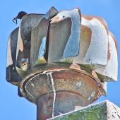 Common starling. Successful nest in revolving cowl. Lower Hutt, November 2007. Image © John Flux by John Flux