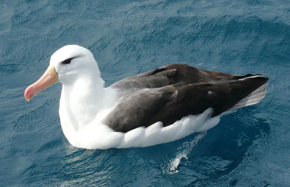 Cook Strait Island Birds
